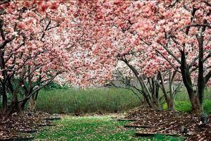 """امروز؛ """"روز طبیعت"""" در ایران/با فلسفه 'سیزده بدر' آشنا شویم"""