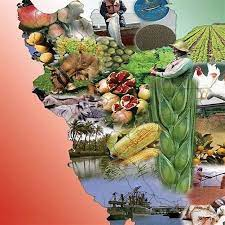 نقد وعده شگفت انگیز یک نامزد ریاست جمهوری:تولید غذای ۵۰۰ میلیون نفر!